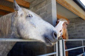 Wine Country Horses